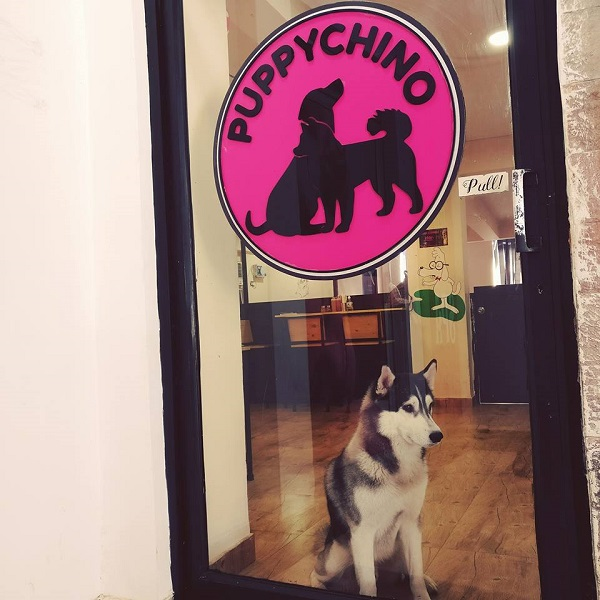 PuppyChino: First Ever Dog's Cafe in Delhi